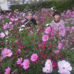 秋桜と楽しいヒトトキ(*^▽^*)